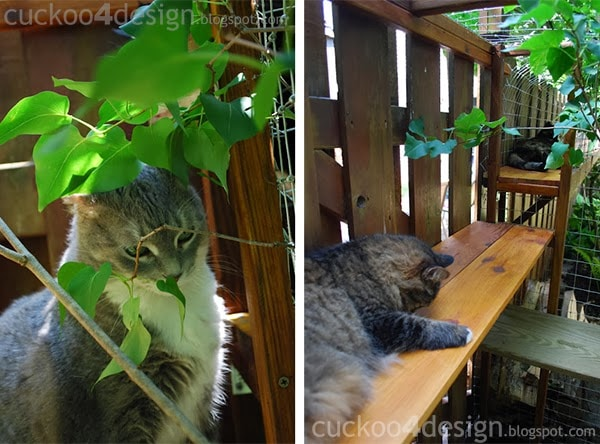Cat Enjoying Outdoor Enclosures