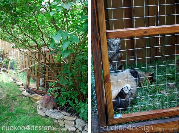 Easy Diy Cat Enclosure To Keep Your Indoor Cats Happy And Safe