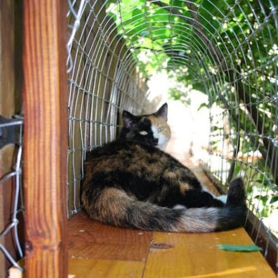 Easy DIY Cat Enclosure