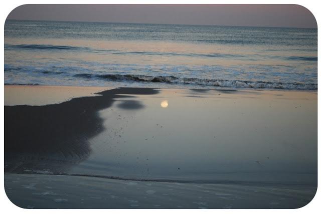 beach in Avalon