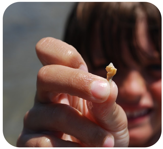 boy with sea shell