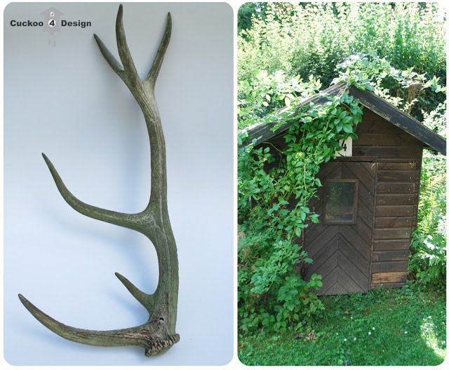 deer antler as decoration