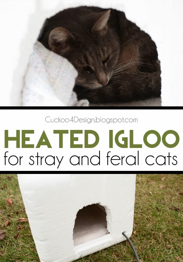 DIY heated igloo shelter for outdoor cats