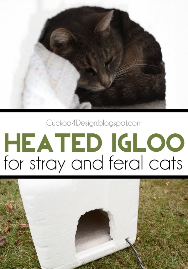 DIY heated igloo cat house for feral and stray cats