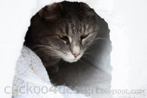 half blind stray cat in igloo cat house