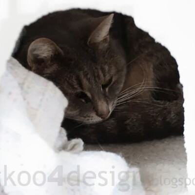 outdoor heated igloo cat house