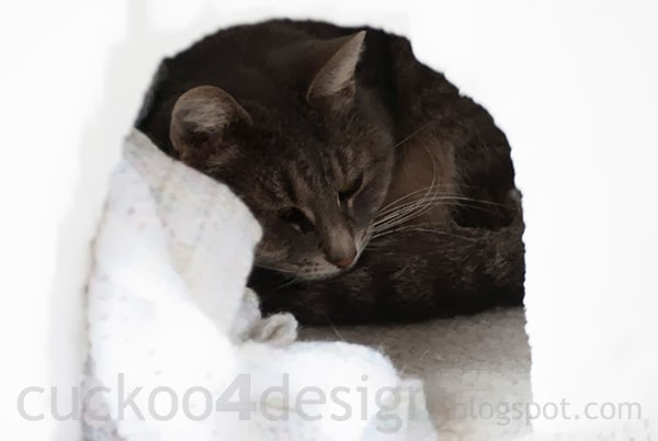 heated igloo shelter for outdoor cats
