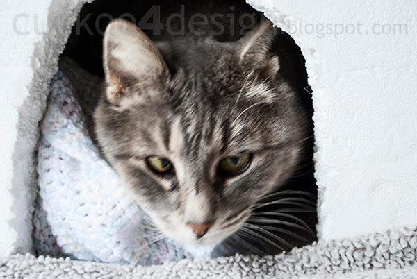 cat coming out of igloo cat house