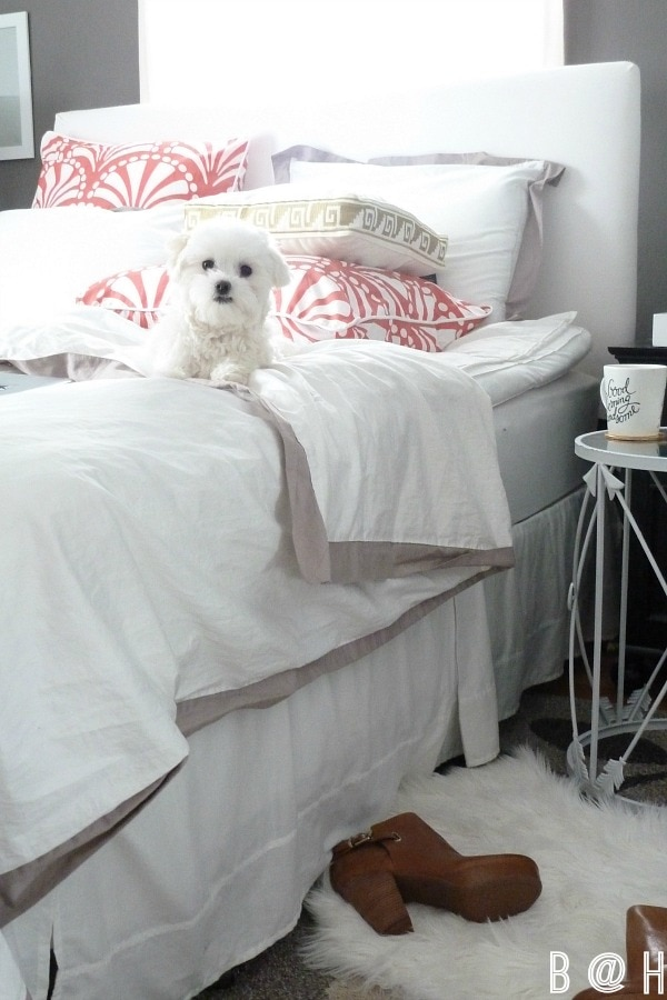 Living Pretty with Your Pets || B @ H