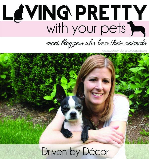 Pet-Series_Driven_by-decor