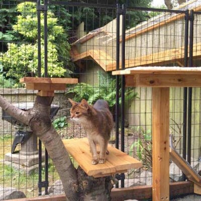 Awesome Large DIY backyard Cat Enclosure
