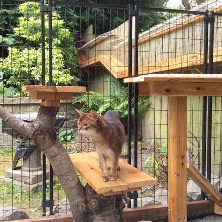 Awesome Large DIY backyard Cat Enclosure