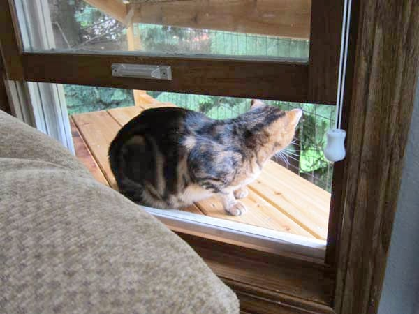 cat perching on a cat enclosure window