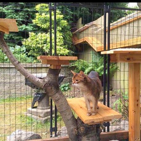 Gallery For Diy Cat Enclosure