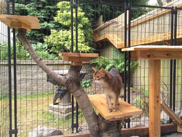 large catio cat enclosure structure with trees and climbing posts