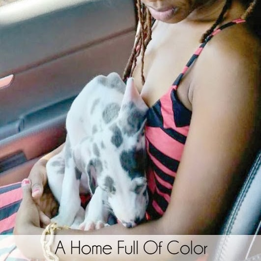 Living Pretty With Your Pets: A Home Full Of Color