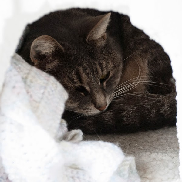 outdoor cat igloo