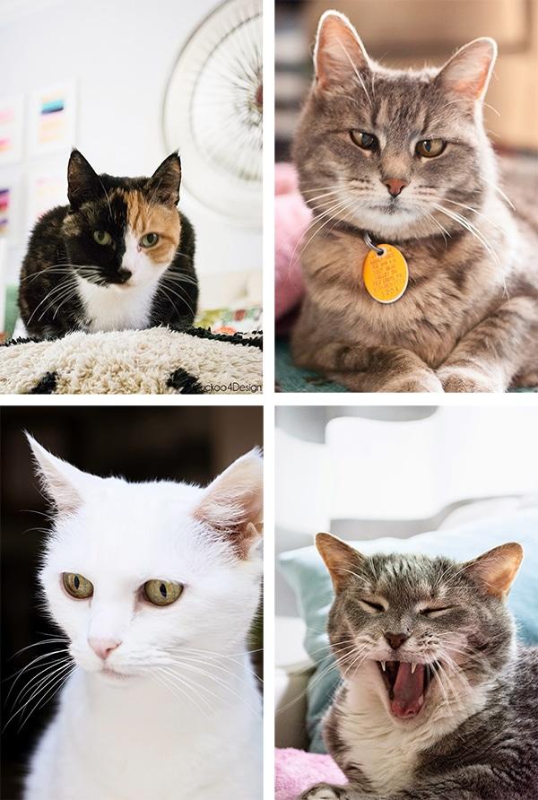 Cuckoo4Design cats