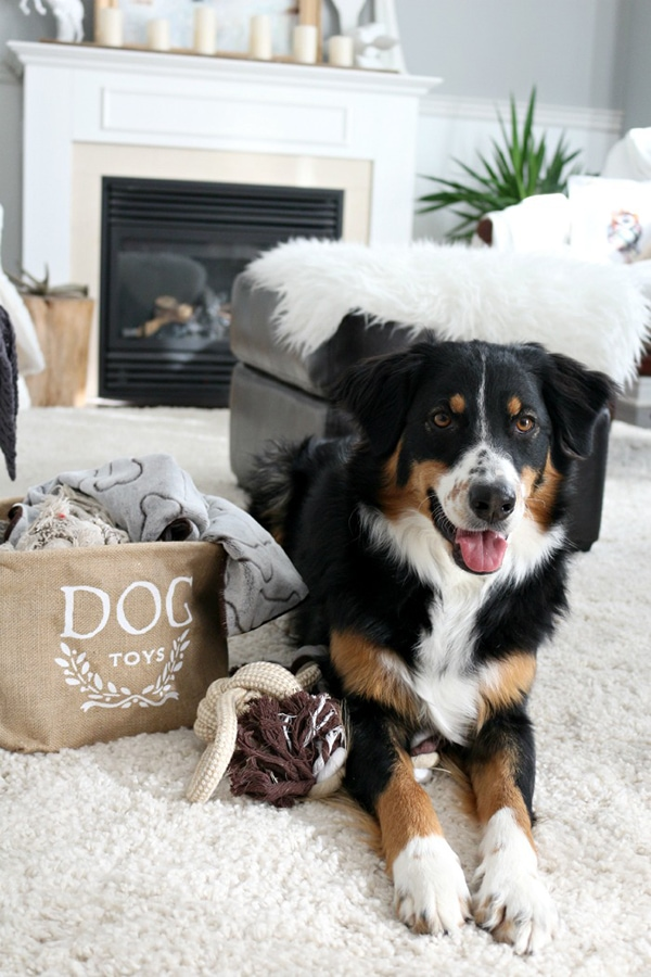 Living Pretty With Your Pets: Craftberry Bush