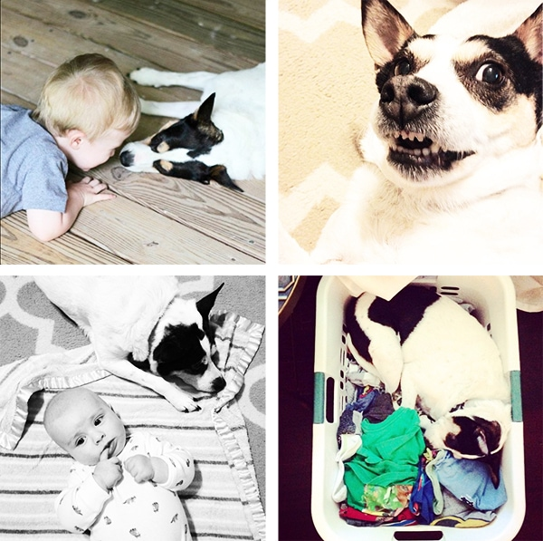 Living Pretty with Your Pets: DIY on the Cheap