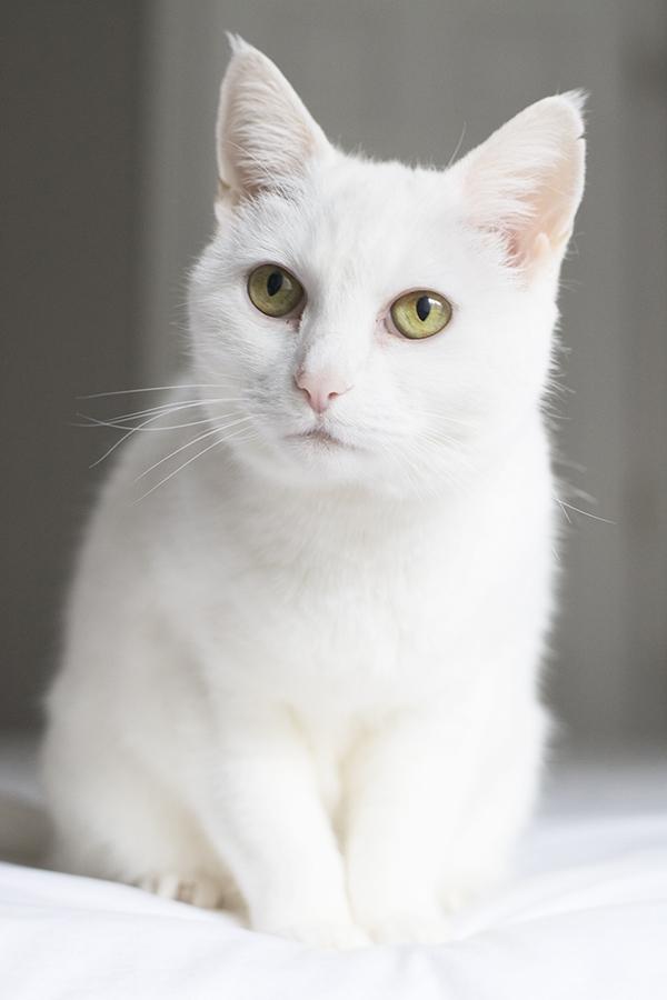 cats_cuckoo4design_41
