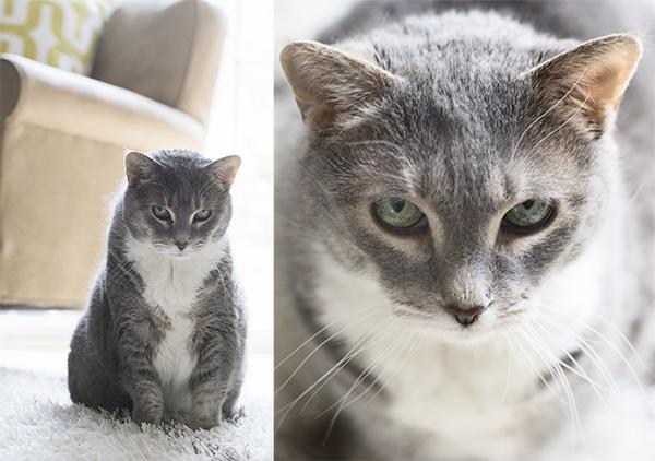 cats_cuckoo4design_44