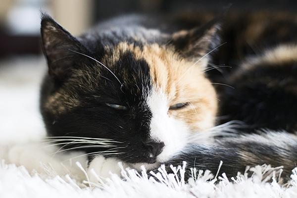 cats_cuckoo4design_45