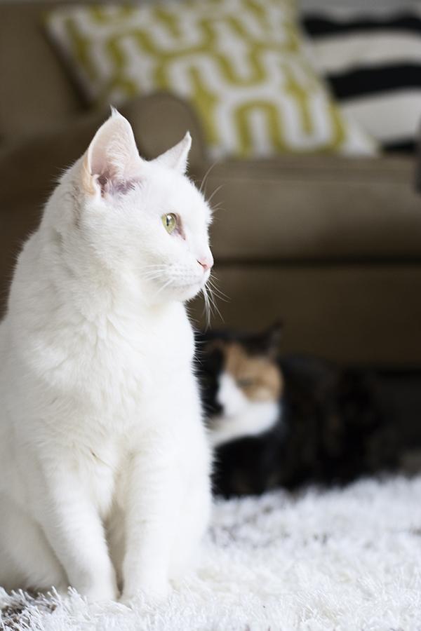 cats_cuckoo4design_64
