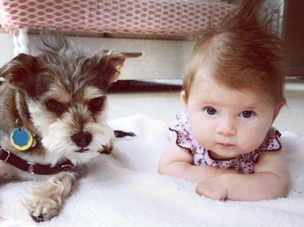 dog and baby with mohawk