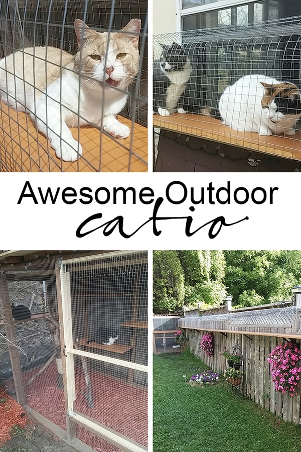 awesome big outdoor catio cat enclosure with long tunnels and cage