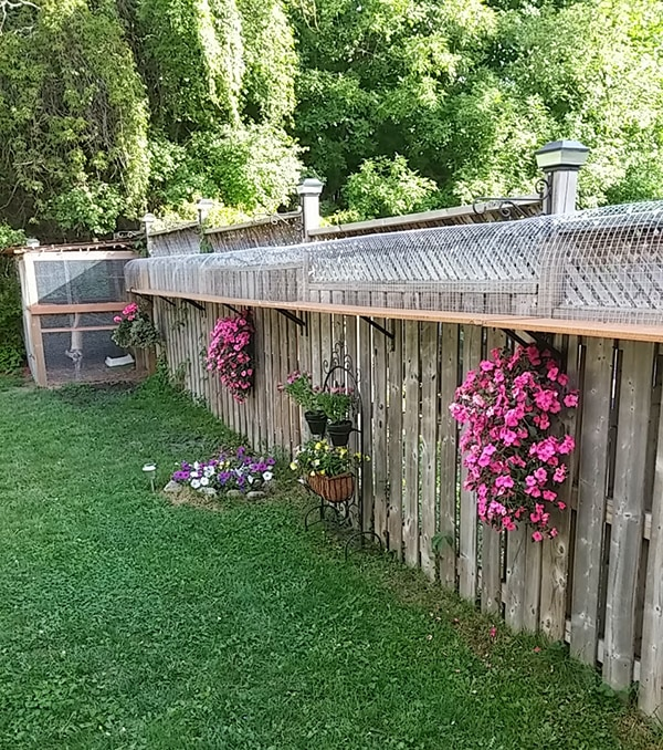 wire mesh tunnels built along a wooden fence for cats