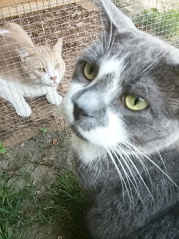 cats enjoying their outdoor enclosure
