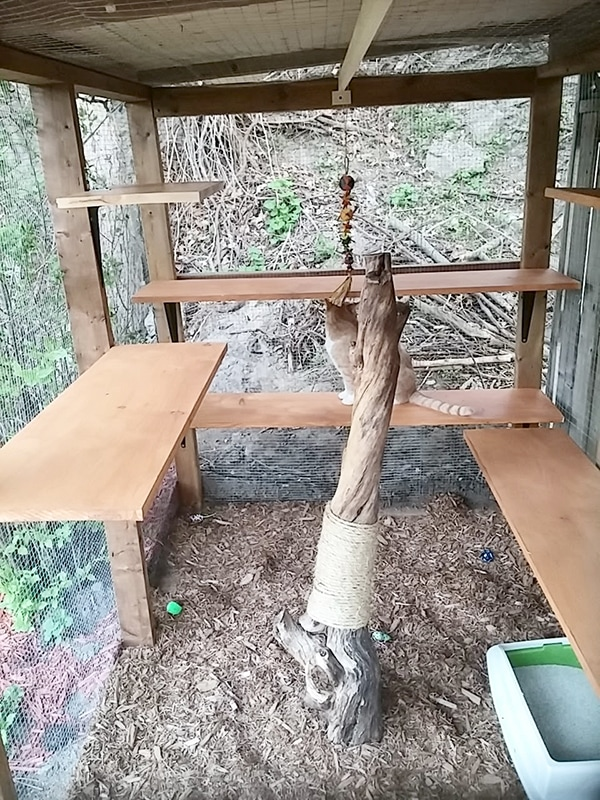 cat enclosure with wooden lounging spots and tree