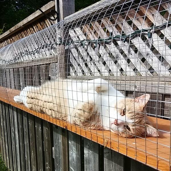 Outdoor Cat Jungle Gym