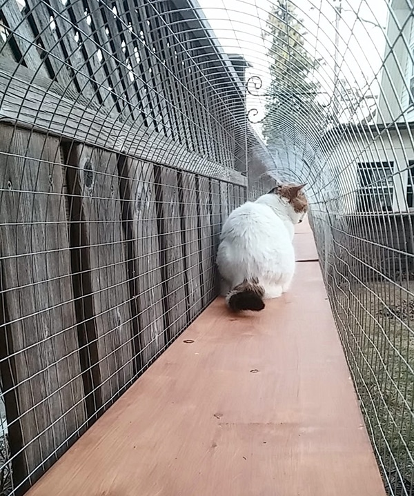 cat sitting in a wire mesh tunnel