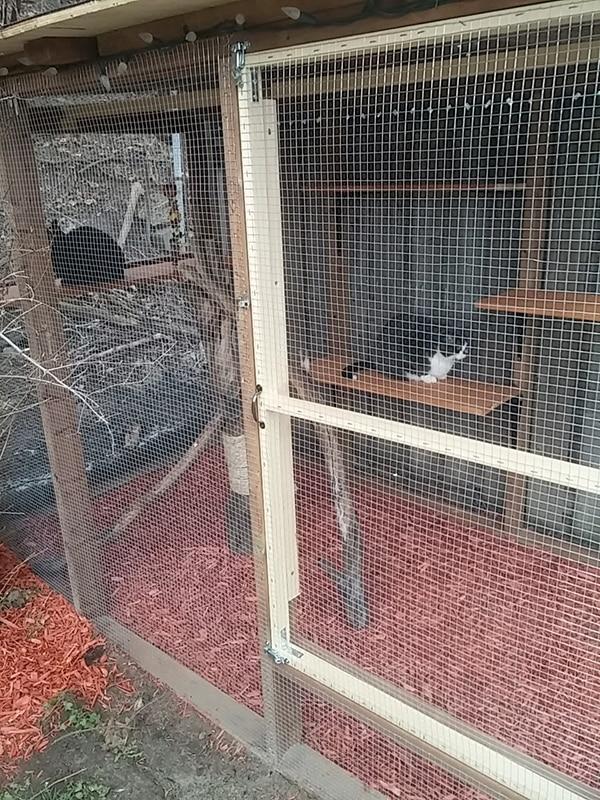 cats enjoying large outdoor cat enclosure