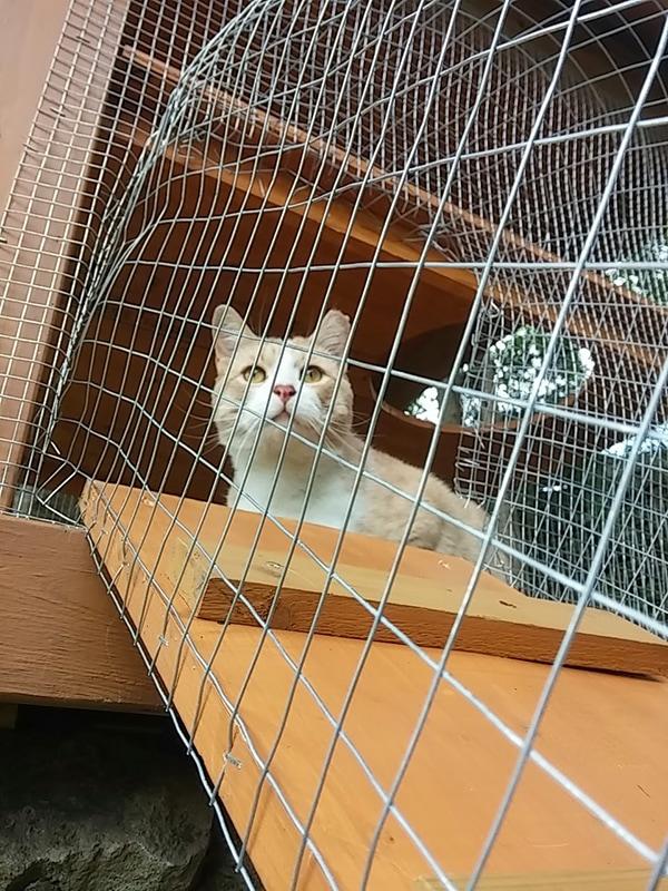 cat lounging in high cat enclosure