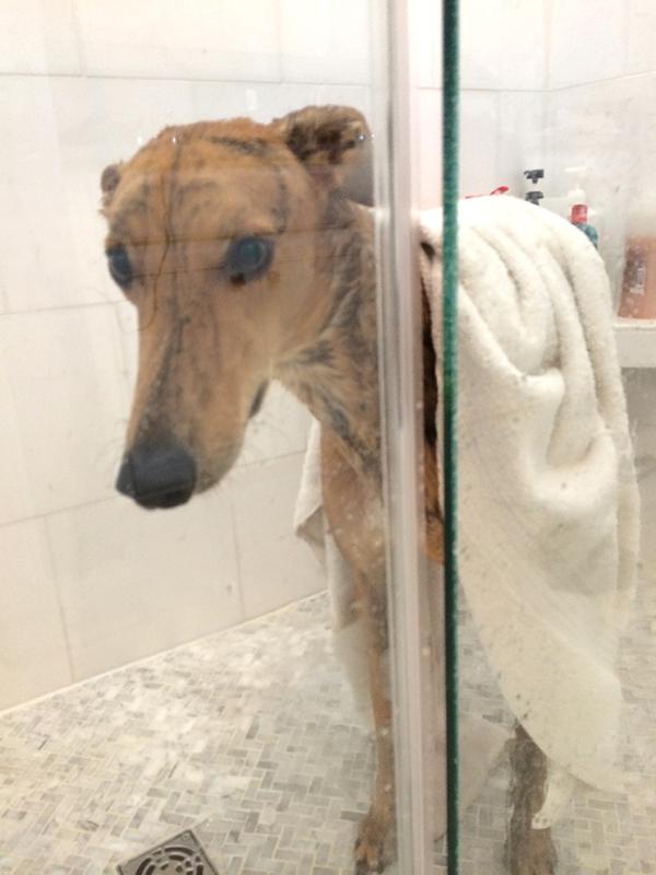 Eric-Shower
