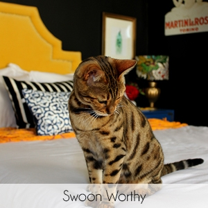 Living Pretty with Your Pets: Swoon Worthy