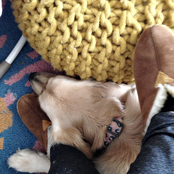 A Creative Day Blog and her dog - Living Pretty With Your Pets - Cuckoo4Design