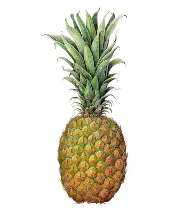 pineapple_print