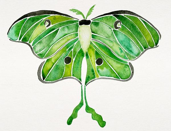 moth_print