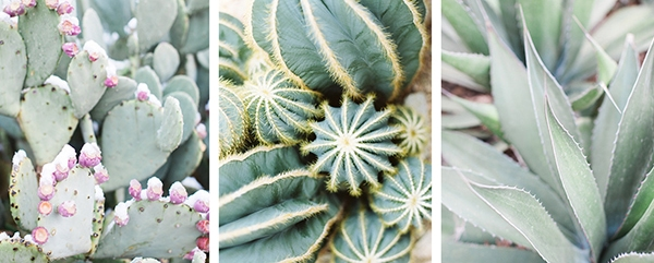 cactus downloadable art prints
