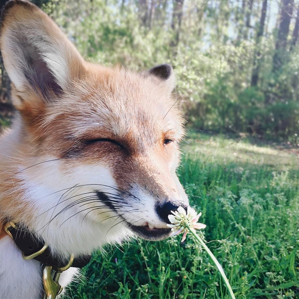 Juniper The Foxx