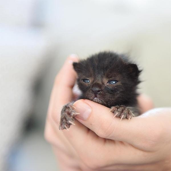 kittenxlady