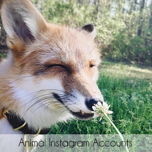 Favorite Animal Instagram Accounts