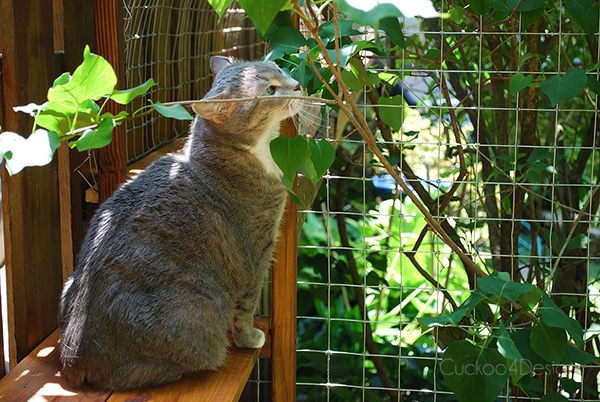 Outdoor cat enclosure to keep your city cats safe