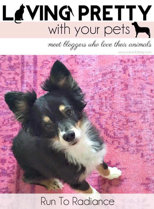 Living Pretty With Your Pets: Run To Radiance