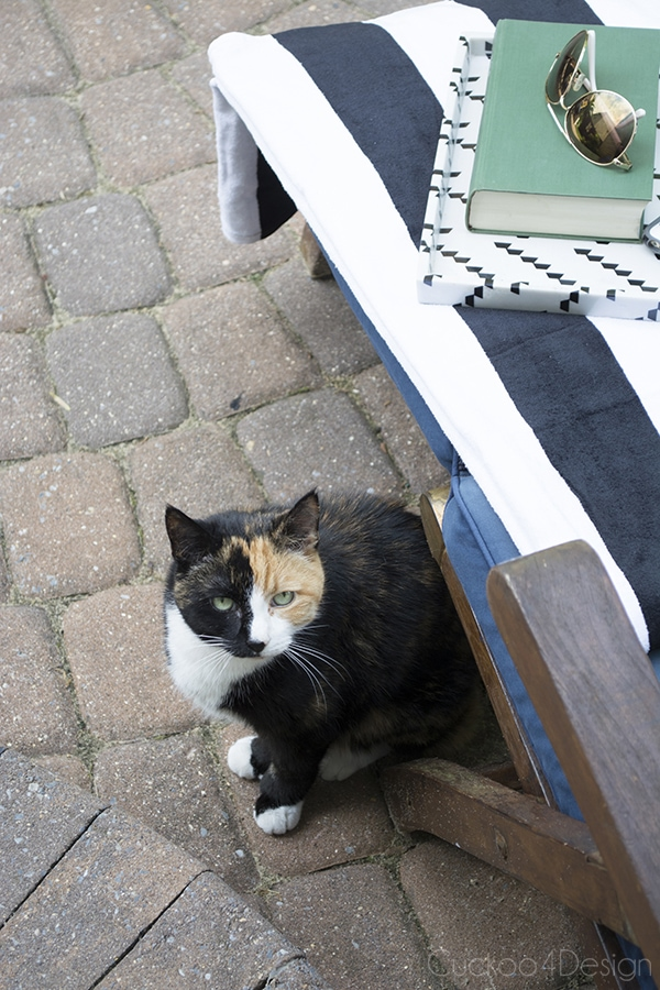calico kitty on patio