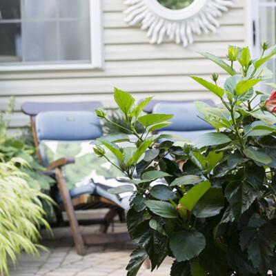 Our un-staged garden